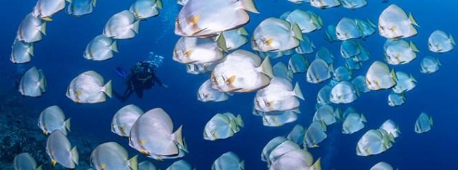 dive North Sulawesi