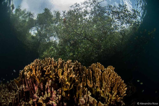 Wide Angle Lembeh Strait