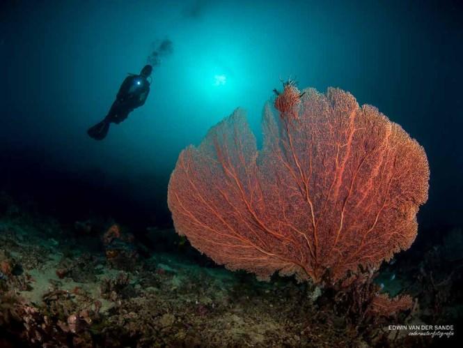 PADI Deep diver bunaken
