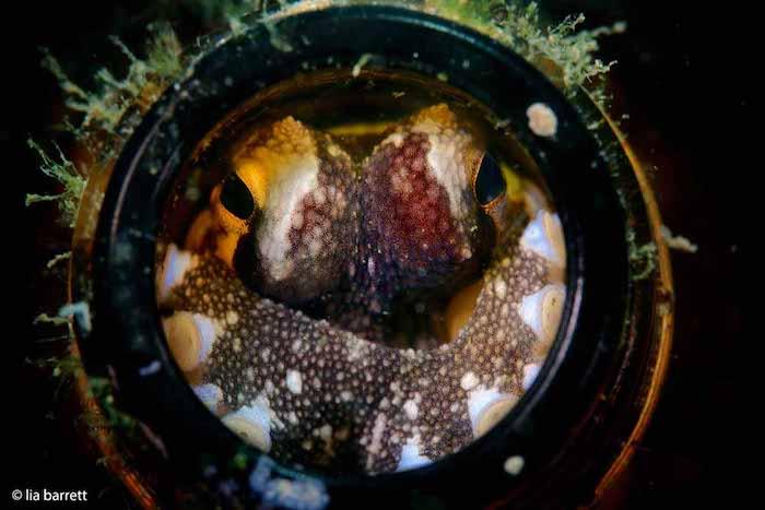 Macro Underwater Photography