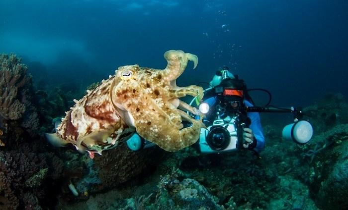 Underwater Photography Sulawesi