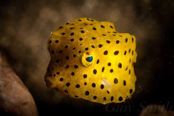 Underwater Photography Lembeh