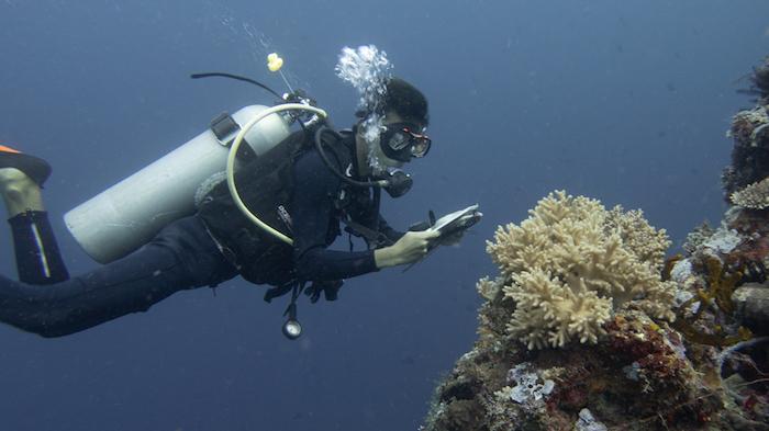 Ocean Gardening at Bangka Island