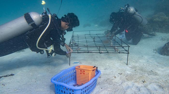 Ocean Gardener Bangka