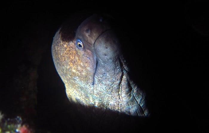 Moray night diving