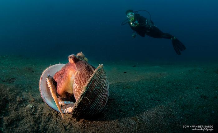 Manado Bay Scuba Diving