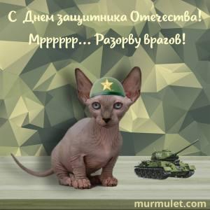 День защитника отечества мурмулет