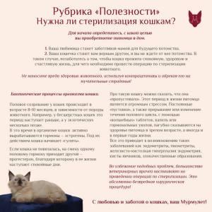 Нужно ли стерилизовать котенка