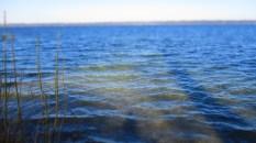 Schattenspiele im Wasser