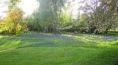 blauer Blumenteppich