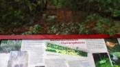 Wald auf dem Vormarsch - Vögel als Indikatoren - wie schön!