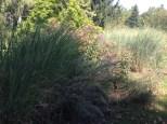 Gräser und Stauden