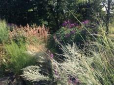Botanischer_Garten_Pankow_7040