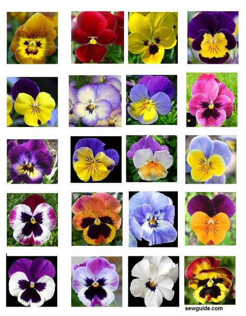 Pansy color inspiration