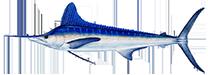 billfish