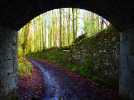 Tunnel at Moorehall