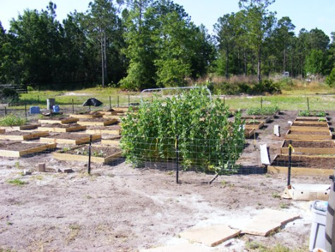 Garden May 4 2008