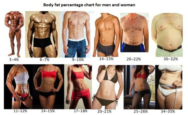 Image result for bodybuilding body fat percentage pictures