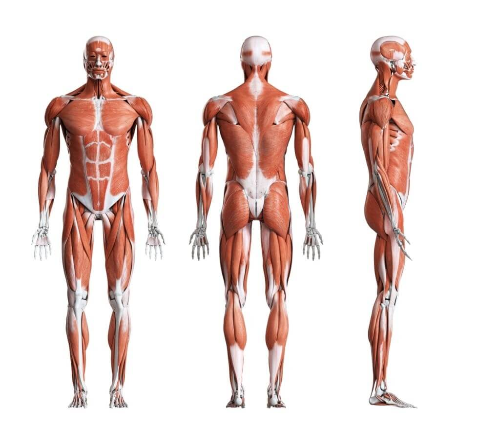 How Do Different Muscles Help To Perform Tasks? Body Movement Recognition