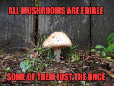 Mushrooms Meme