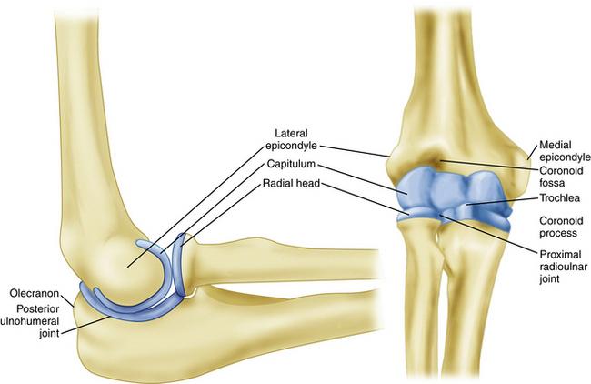 Elbow Arthroscopy: Positioning, Setup, Anatomy, and ...