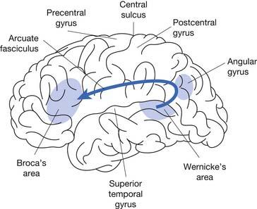 Adult Neurogenic Communication Disorders