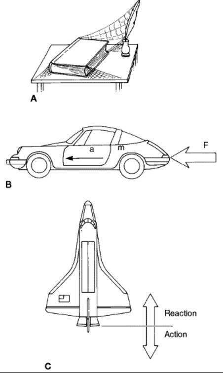 Basic Biomechanics: Newtons Laws of Motion