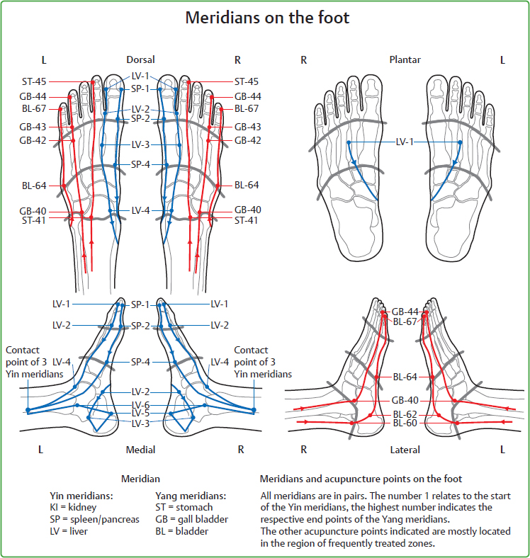 Interrelationships between Zones of the Feet and Meridians ...