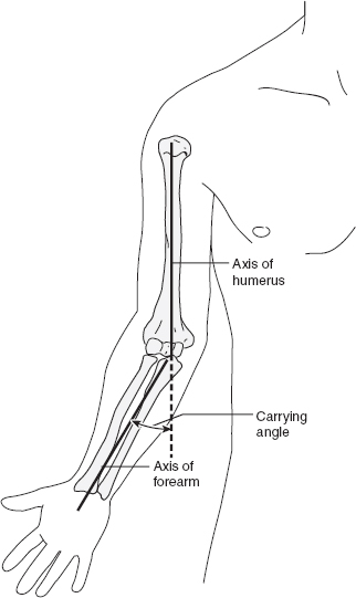 Image result for carrying angle of elbow