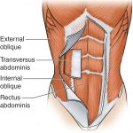 Chest and Abdominal Injuries