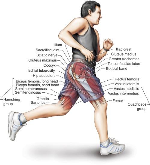 prostatitis hamstring pain)