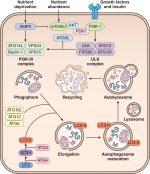 Molecular foundations of cellular injury