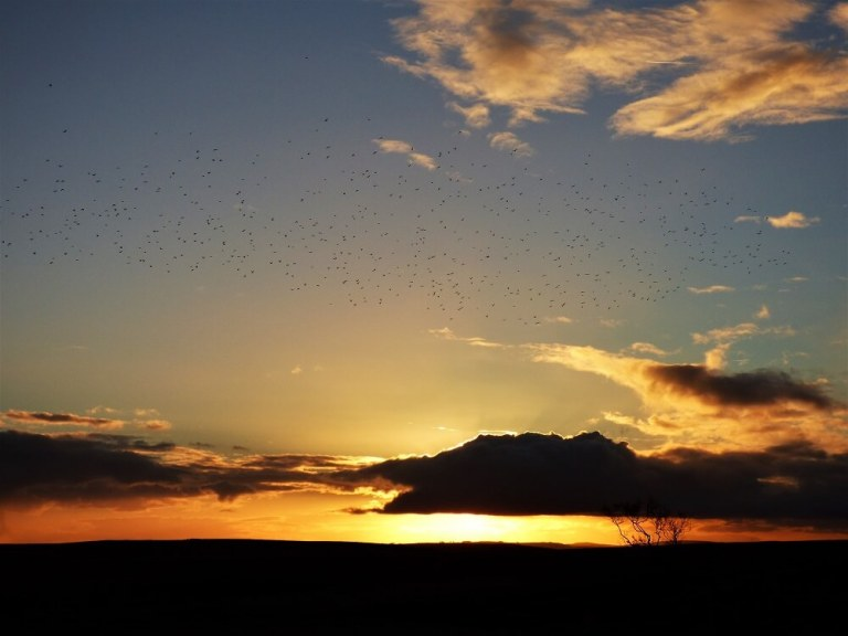 murmuration.jpg?fit=768%2C576&ssl=1