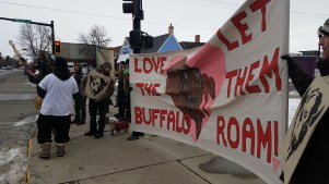 There was alot of buffalove in downtown Bozeman that Valentine's Day afternoon.