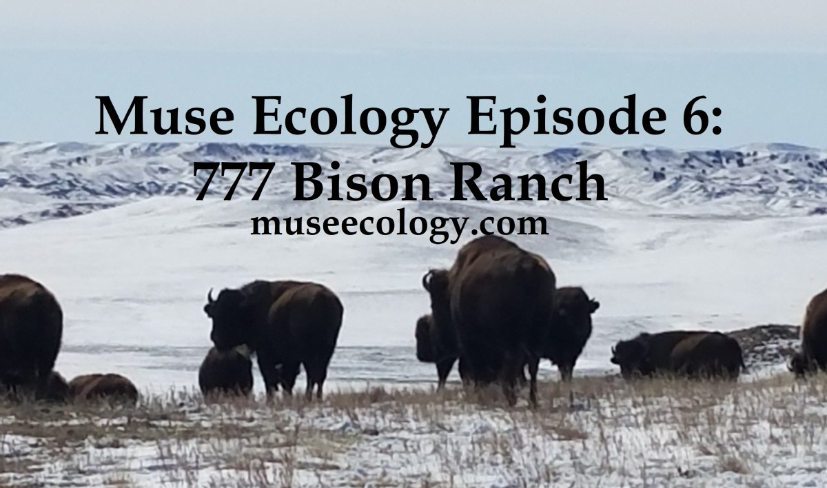 #6 777 Bison Ranch