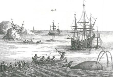"""Henri-Louis Duhamel du Monceau, """"Traité général des pesches"""", 250 planches gravées de 1769 à 1782."""