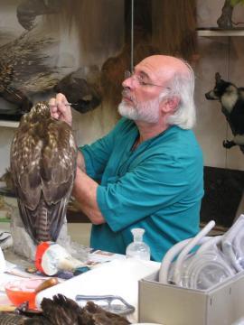 #DayInTheLife il tassidermista del Museo Civico di Zoologia Maurizio prepara un rapace per l'esposizione #MuseumWeek