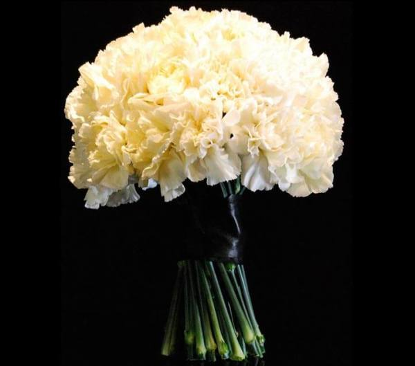 home_carnation