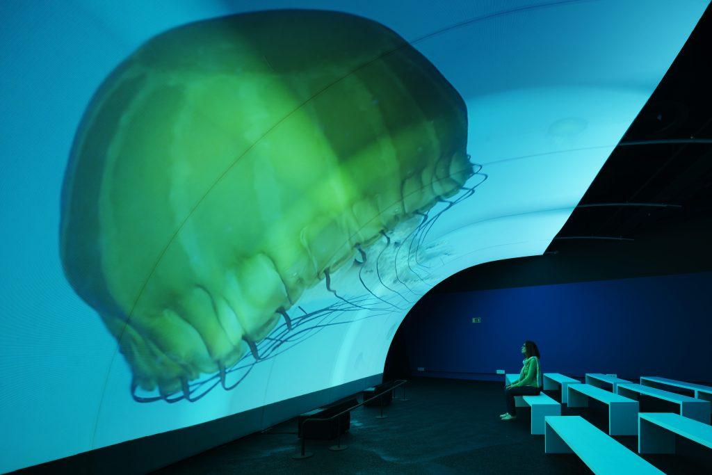 Resultado de imagen de museu blau fotos ocea