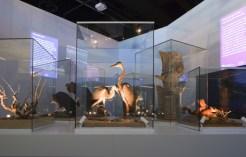 Comportament animal: J. M. Llobet / museuciencies