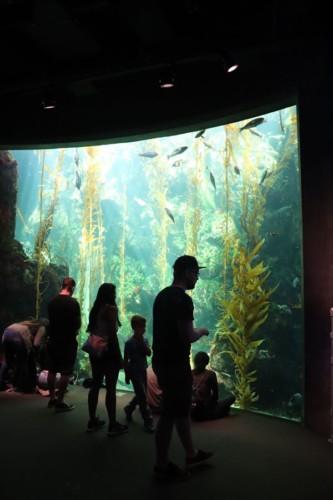 水族館のような水槽展示