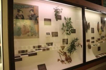 日本の植物の紹介