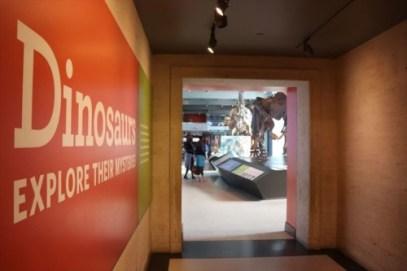 恐竜の展示は定番的な人気です