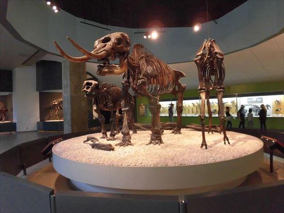 発掘されクリーニングされて骨格が展示されています