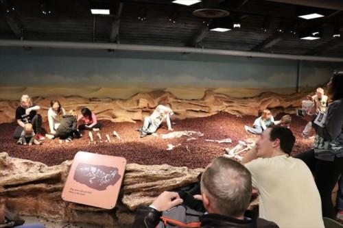 化石の発掘体験