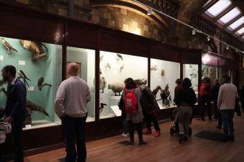 鳥類の展示