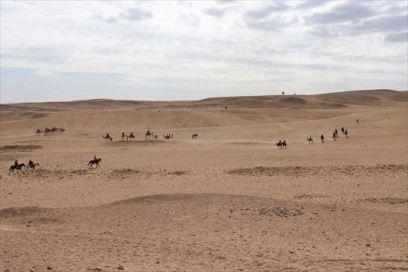 ピラミッド周辺や砂漠をラクダにのって巡るアクティビティは人気。歩いてるとラクダに乗らないのかとしょっちゅう声がかかります