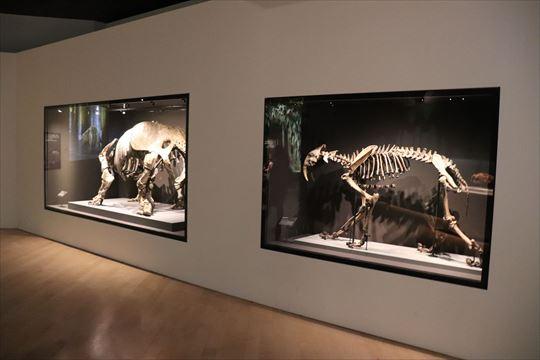 ArtScienceMuseum13_R