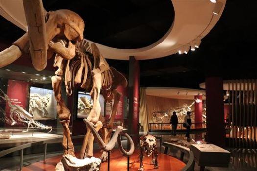 恐竜の化石展示はかなり充実しています