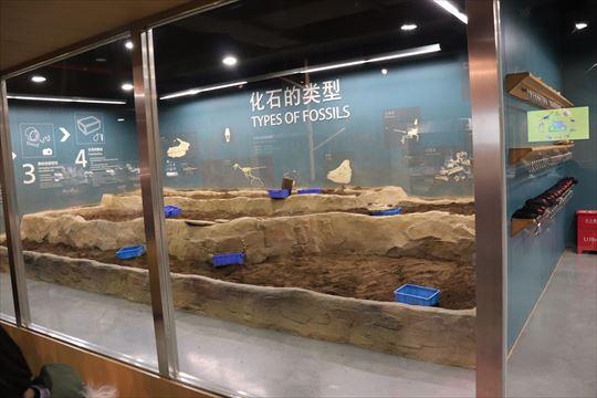 化石の発掘体験ができます